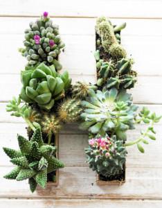 succulent initial planter diy