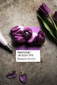 cheesecake stuffed tulips recipe inspired by pantone radiant orchid