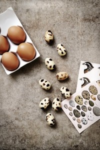 chocolate quail eggs